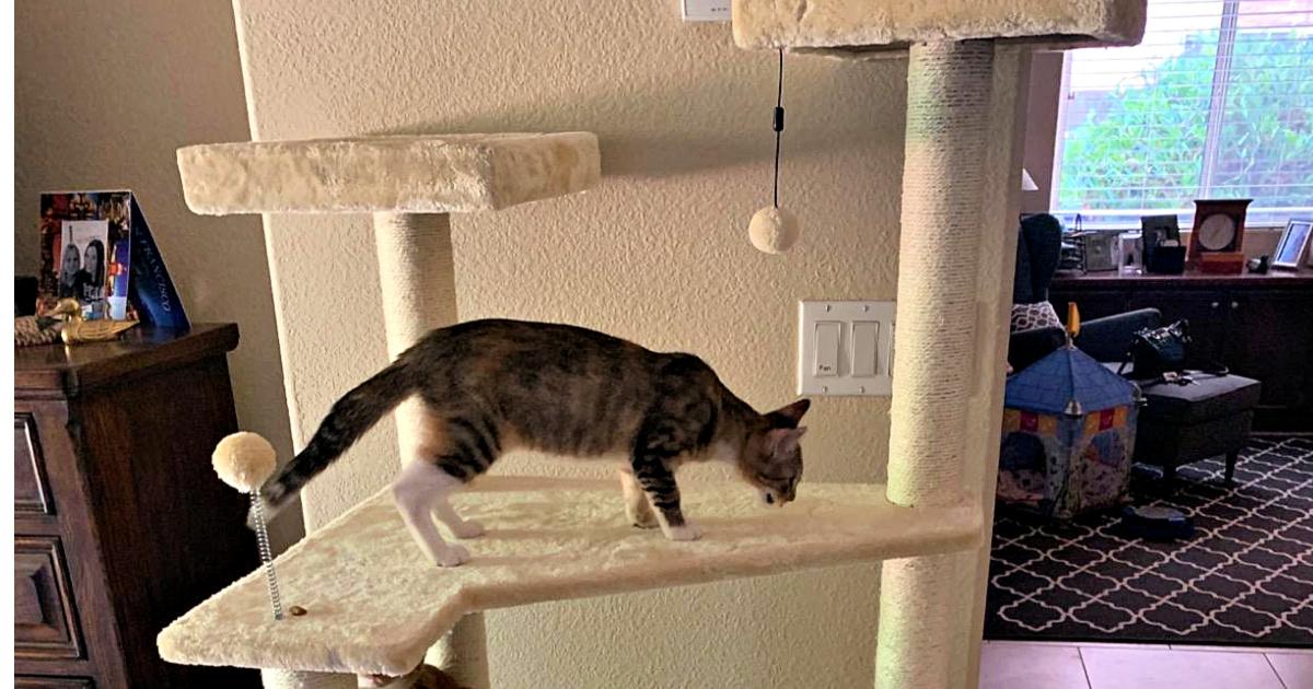 AmazonBasics 70.5-Inch Multi-Level Cat Tree