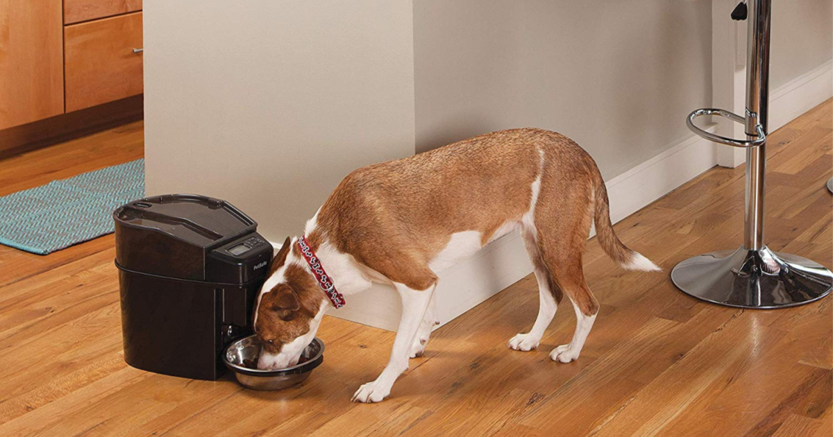 dog eating from automatic pet feeder
