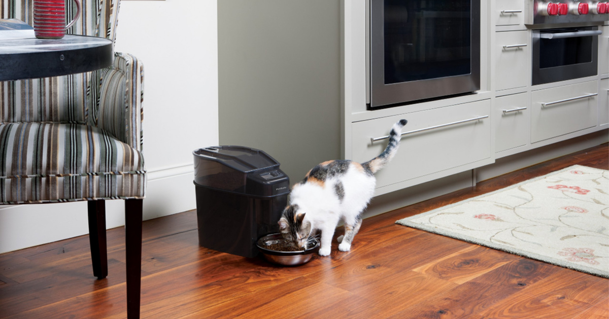 cat eating from automatic pet feeder