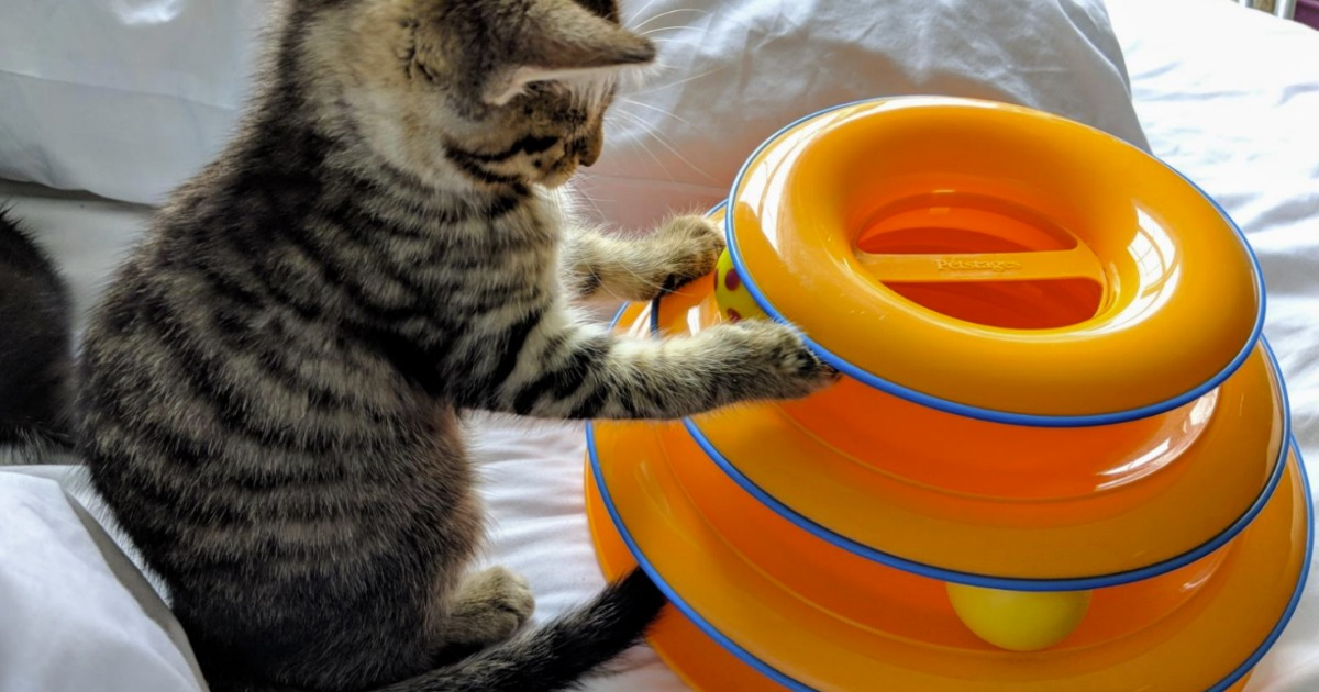 Kitten playing with an orange Cat Tower Toy on bedspread