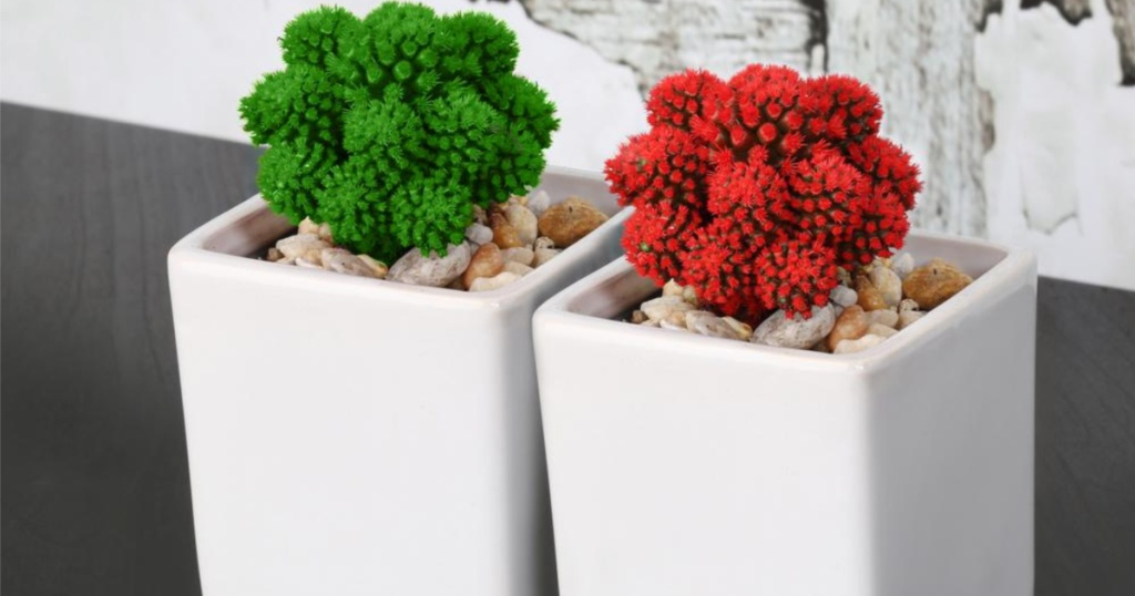 two costa farms live potted christmas plants