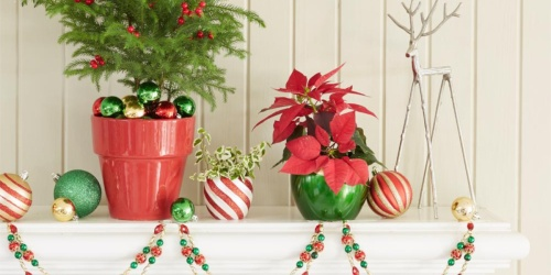 Up to 35% Off Costa Farms Live Christmas Plants + Free Shipping at Home Depot