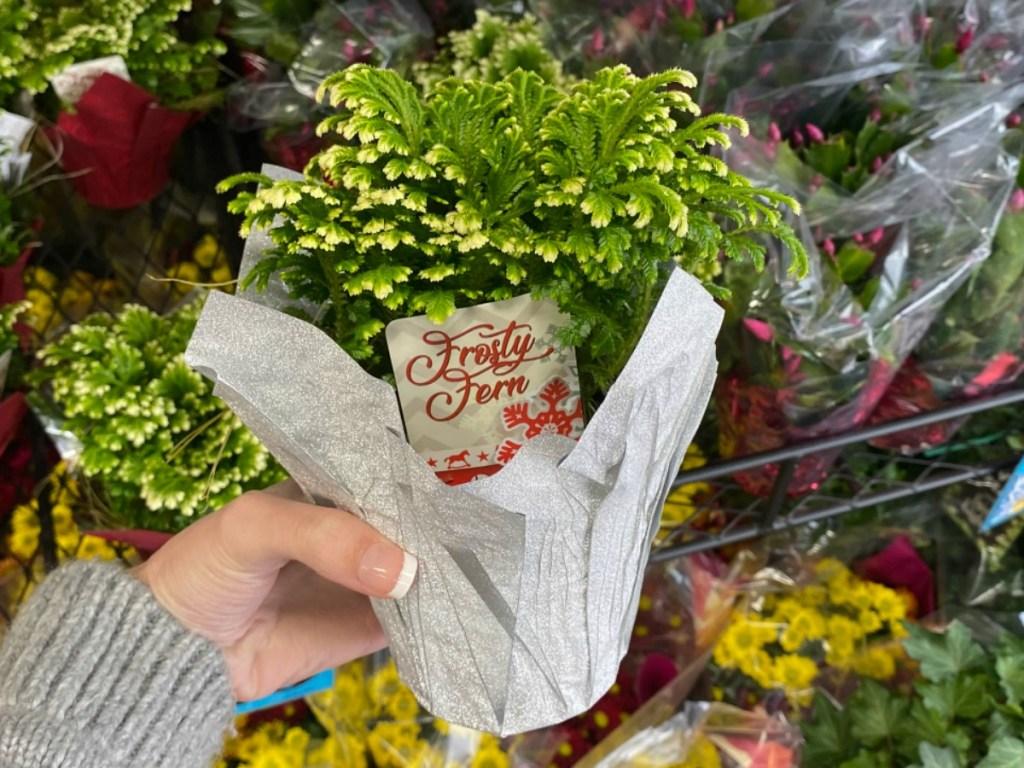 hand holding fern inside store