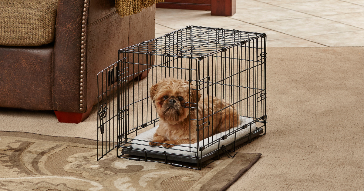 little-dog-in-crate