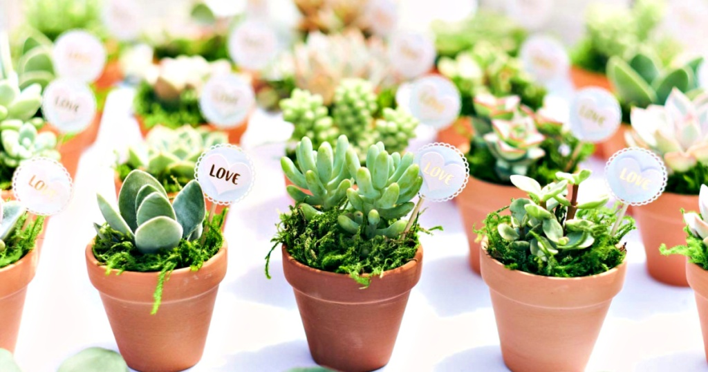 Succulent Party Favors with Love