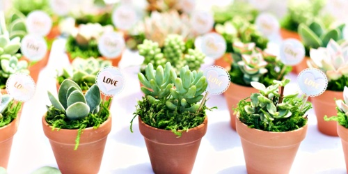 Up To 45% Off Live Succulent Plants | Great Party Favors or Gift Ideas