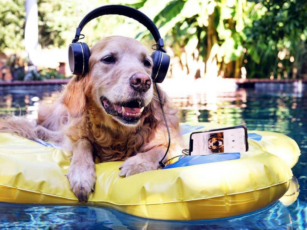 dog on pool float with headphones