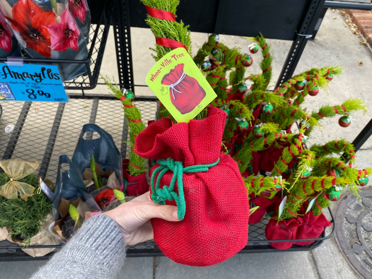 hand holding Grinch-inspired Whoo-Ville Christmas Tree at Trader Joe's