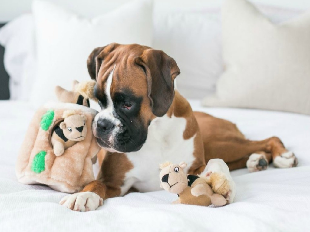 dog on bed with squirrel toys