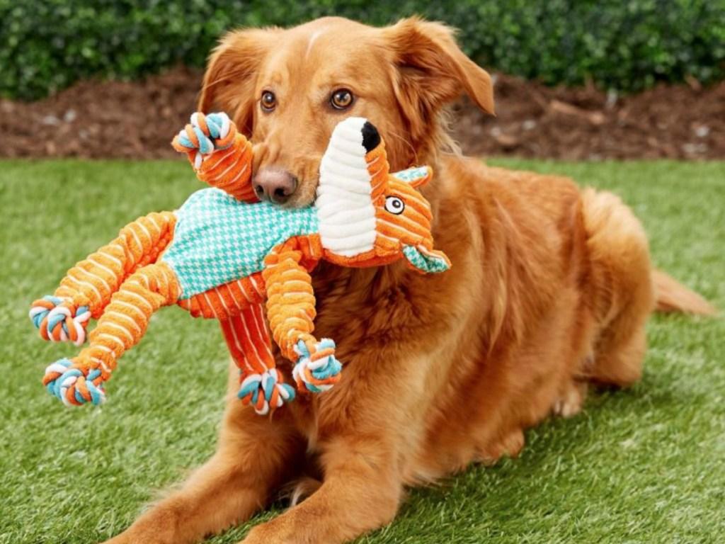 golden retreiver dog holding orange toy in his mouth