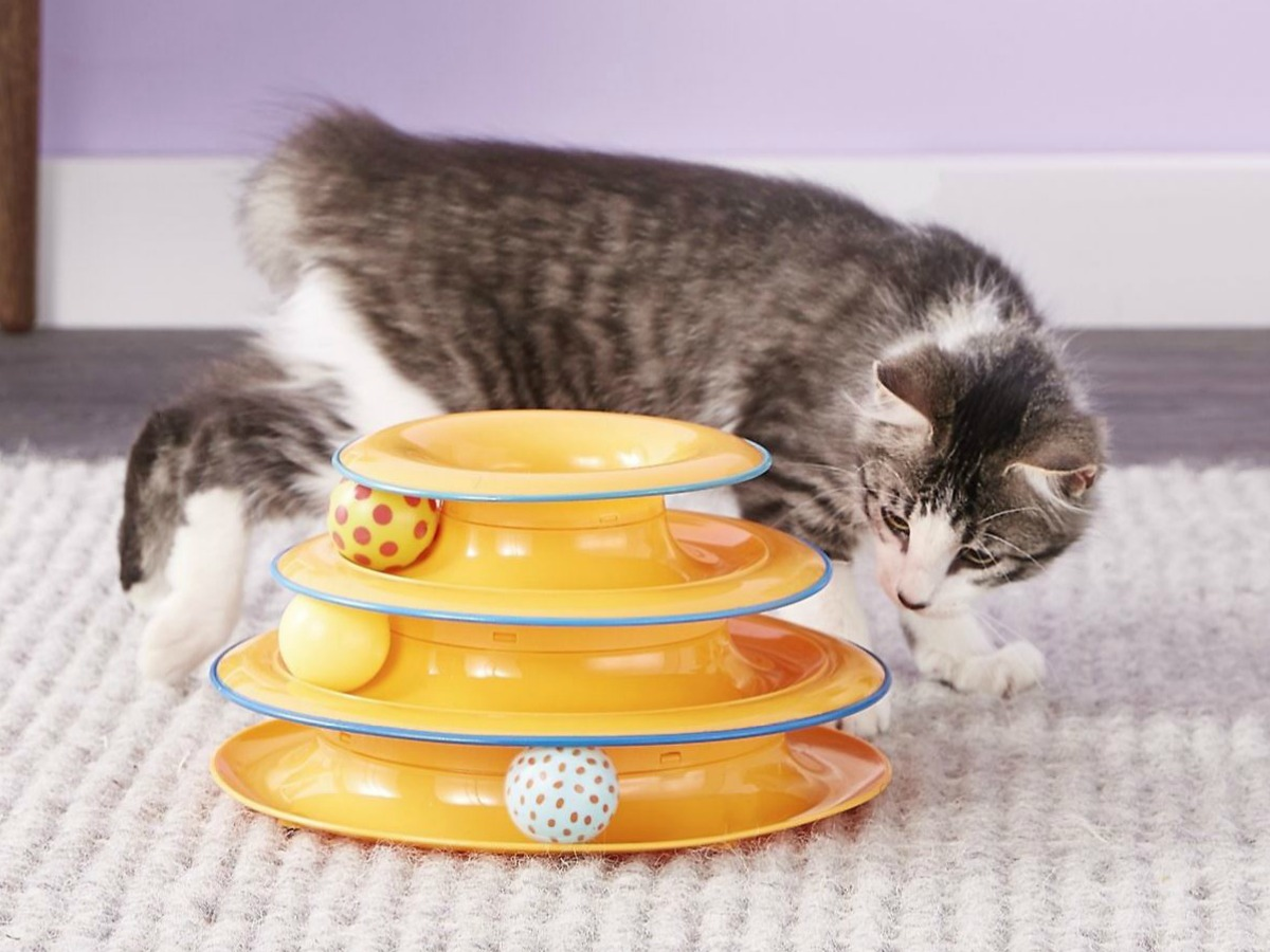 cat playing with yellow toy and balls