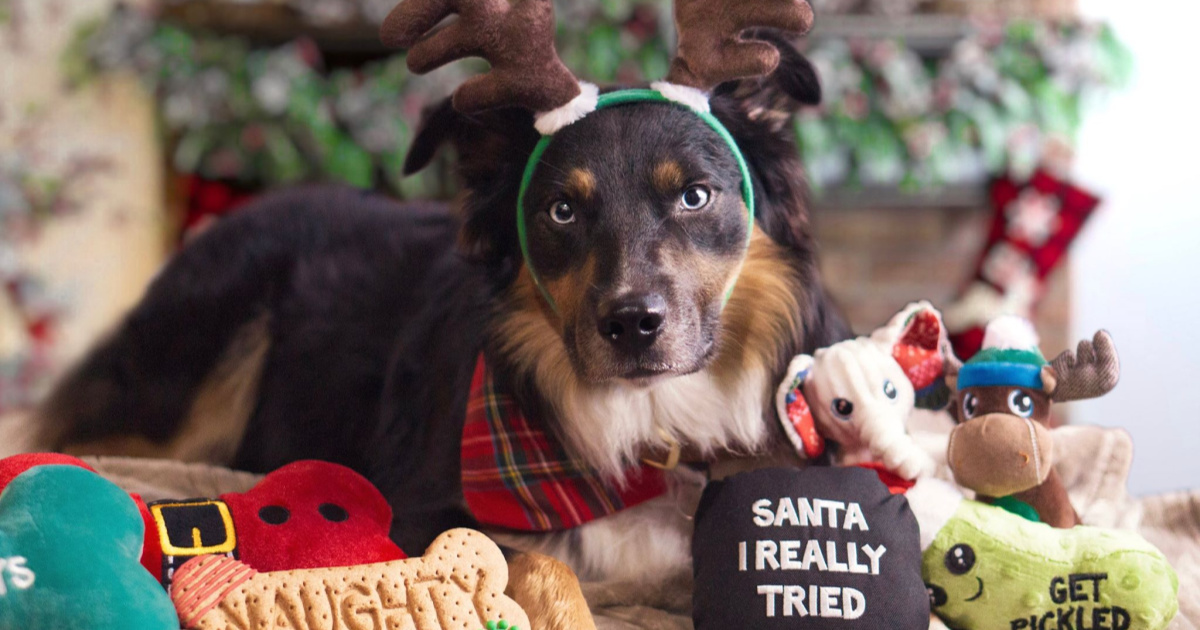 dog with antlers on and toys around him