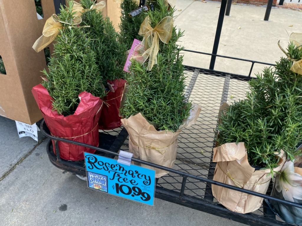 small trees on store display