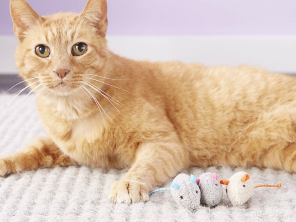 cat laying on carpet by plush mice toys