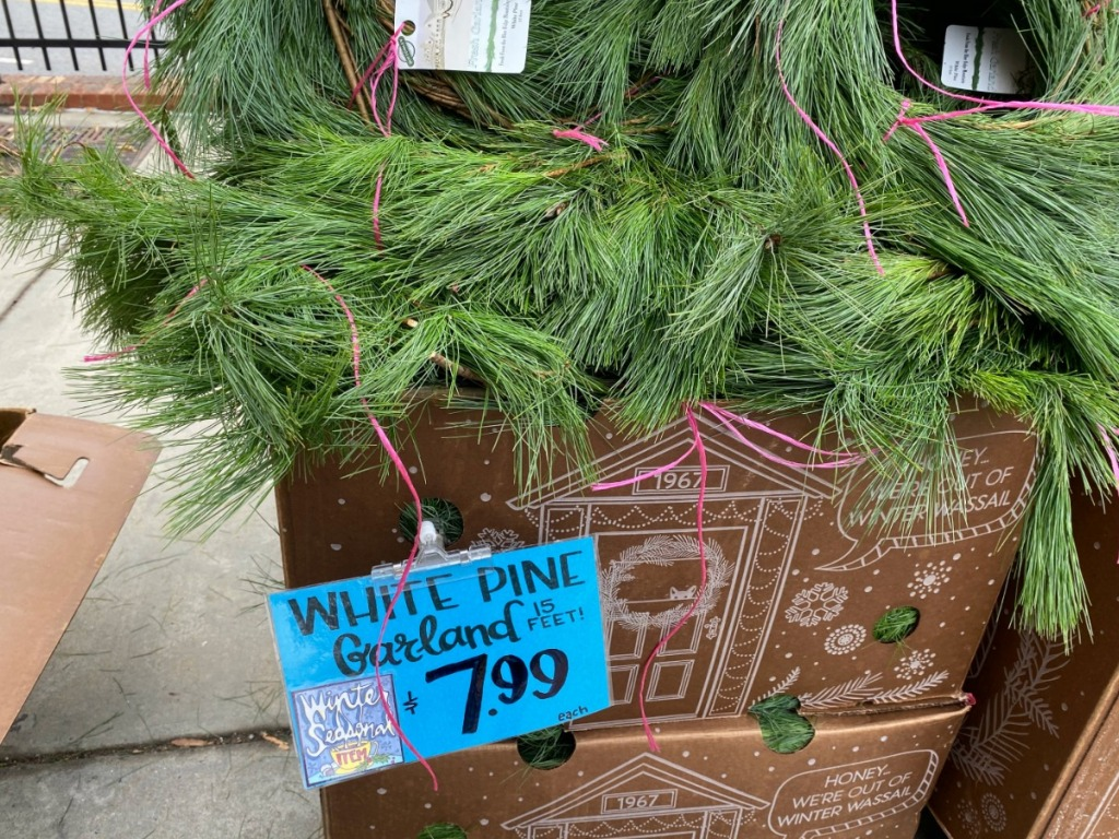box of pine tree branches