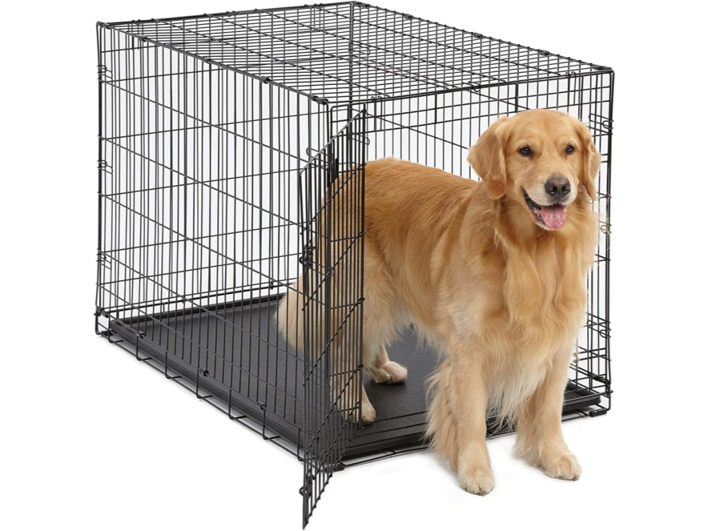 Dog standing inside large pet crate