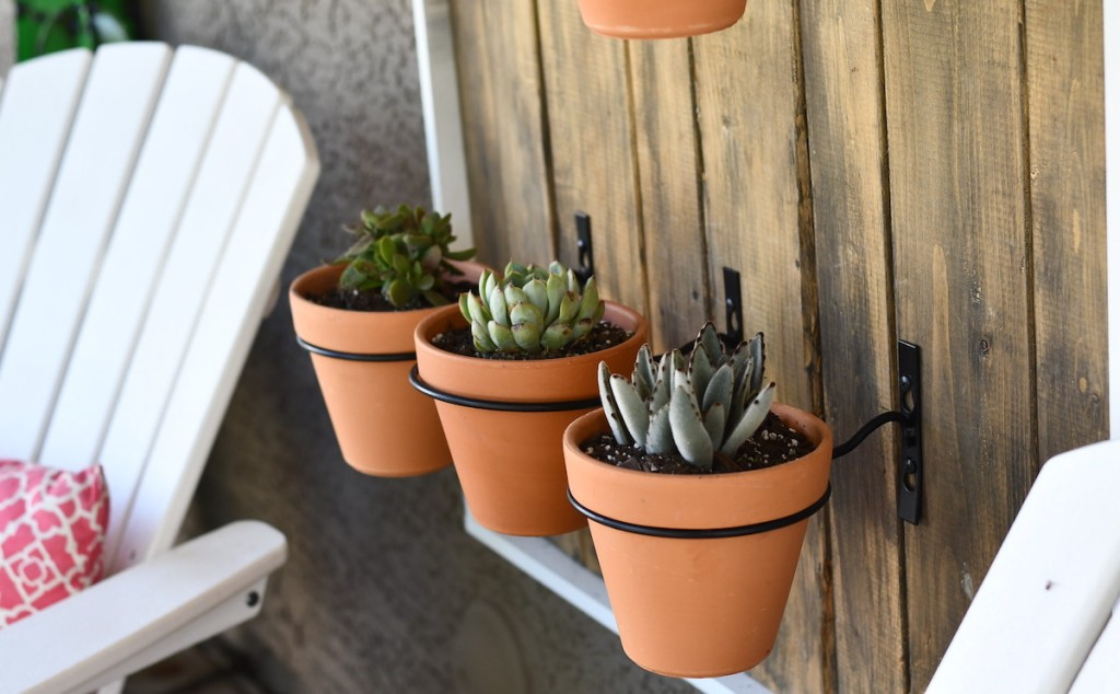 three succulent plants in terracotta planters hanging on wood plank wall