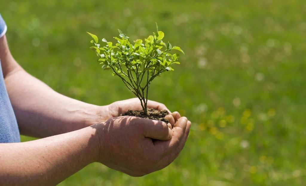 Hands holding a plant and soil outside