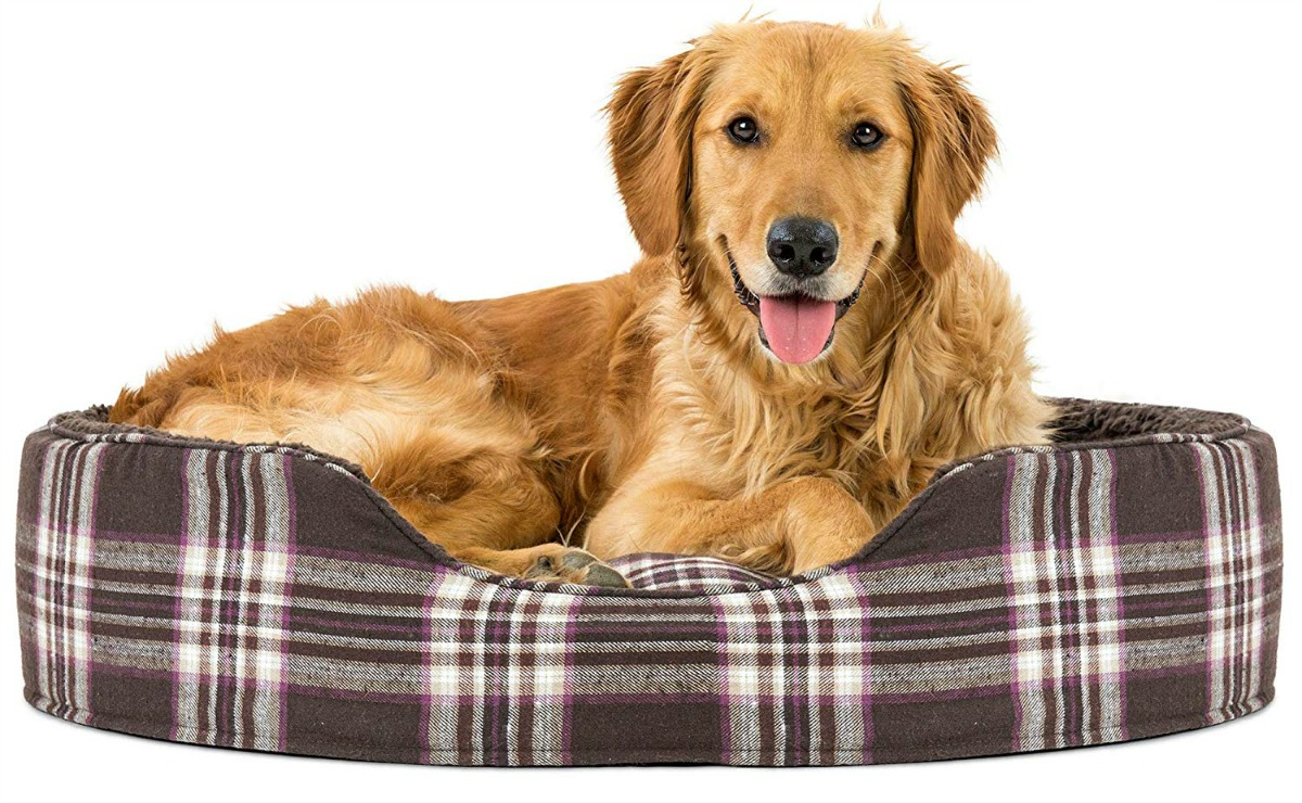 stock image of dog in brown dog bed