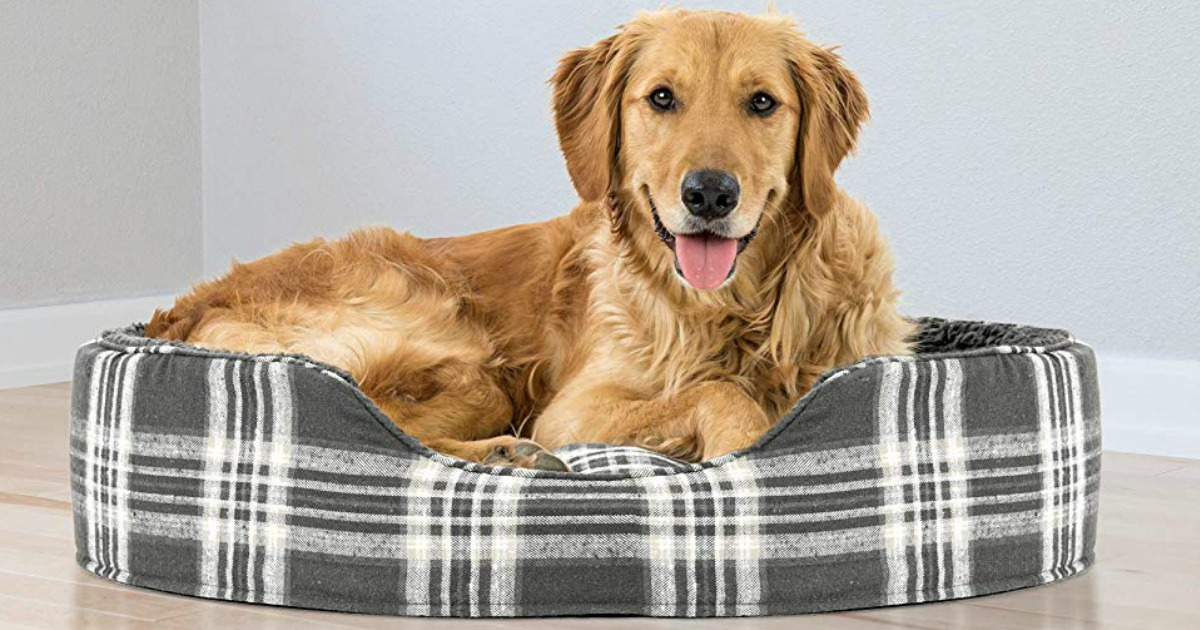 dog resting in dog bed