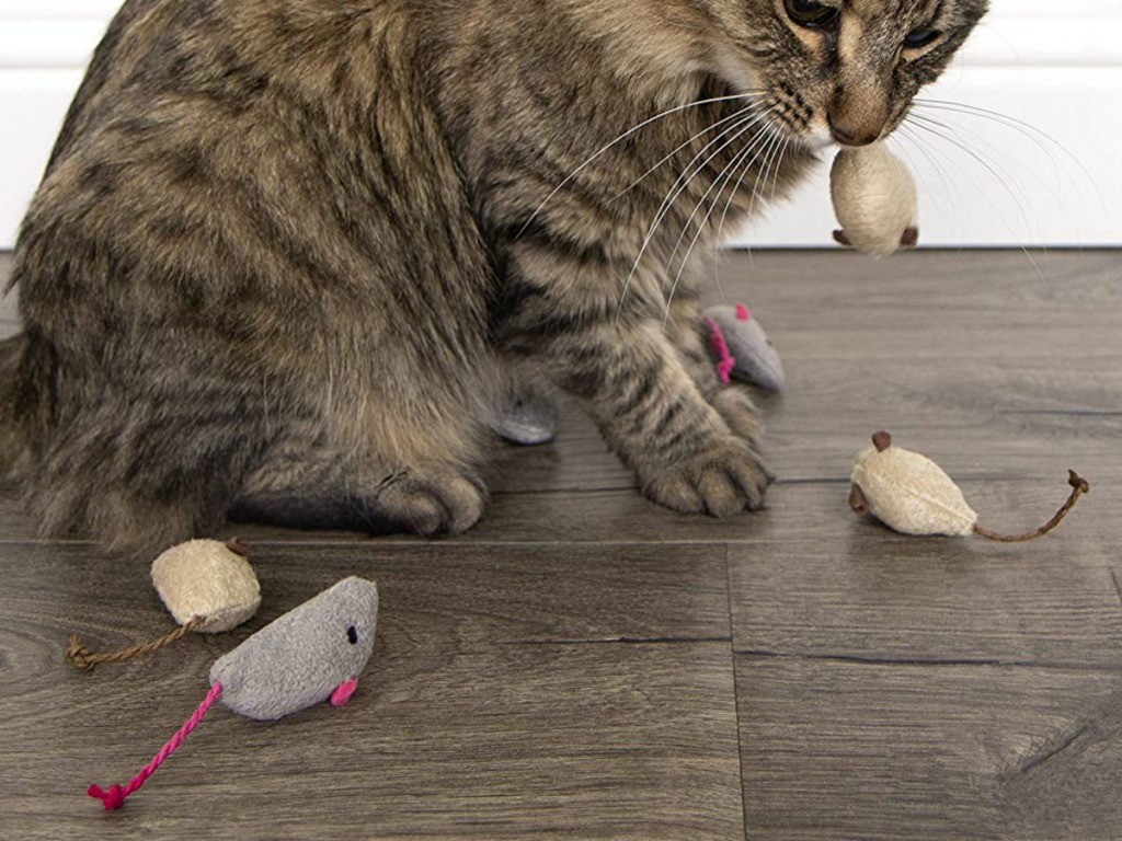 Smartykat Catnip Cat Toys 3 Pack Only 1 75 On Amazon Regularly