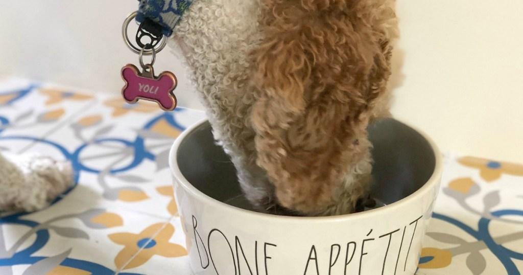 Yoli eating dog food from white ceramic dog bowl
