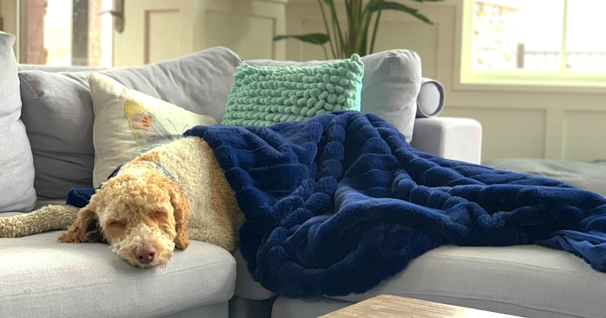 dog sleeping on couch under a blanket
