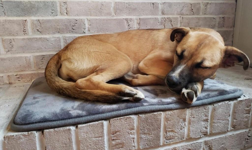 dog sleeping on bath mat