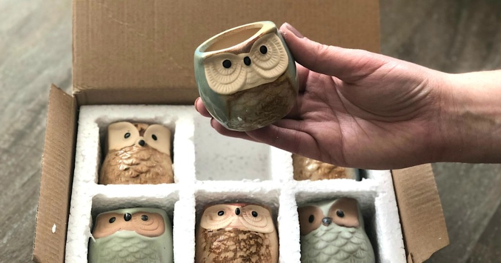 holding mini owl succulent planter pot with box and pots in the background