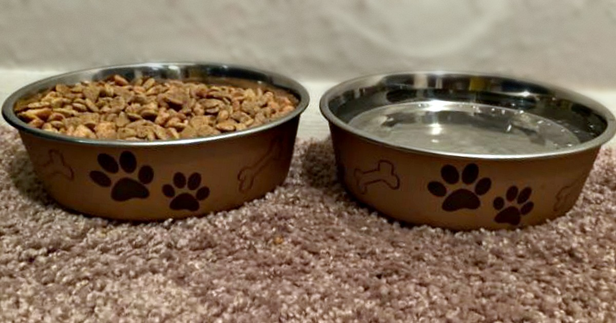 dog bowl with food and water on the floor