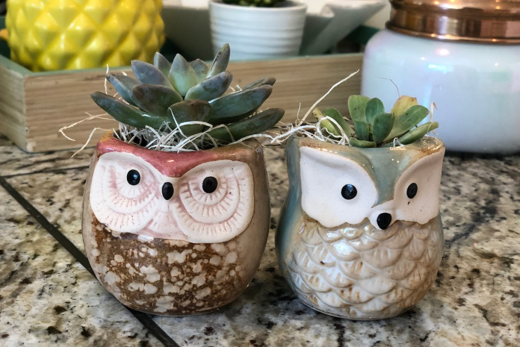 two owl planters with succulents inside sitting on granite countertop