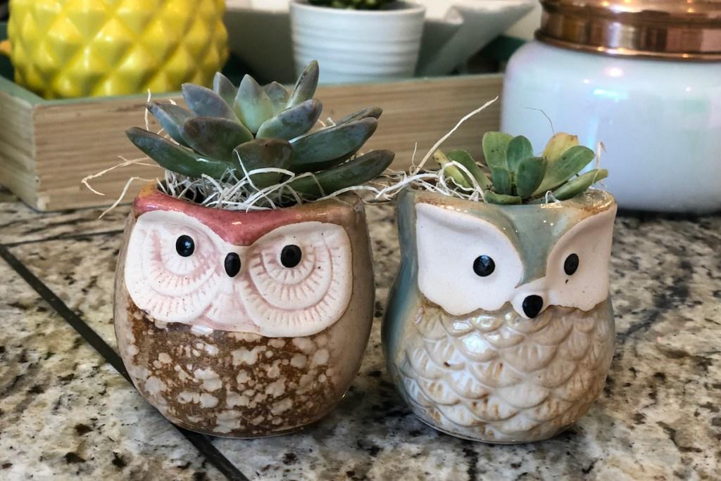 Concrete owl planter Cement planter cute planter Desk planter