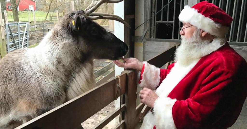 Santa Feeds Reindeers