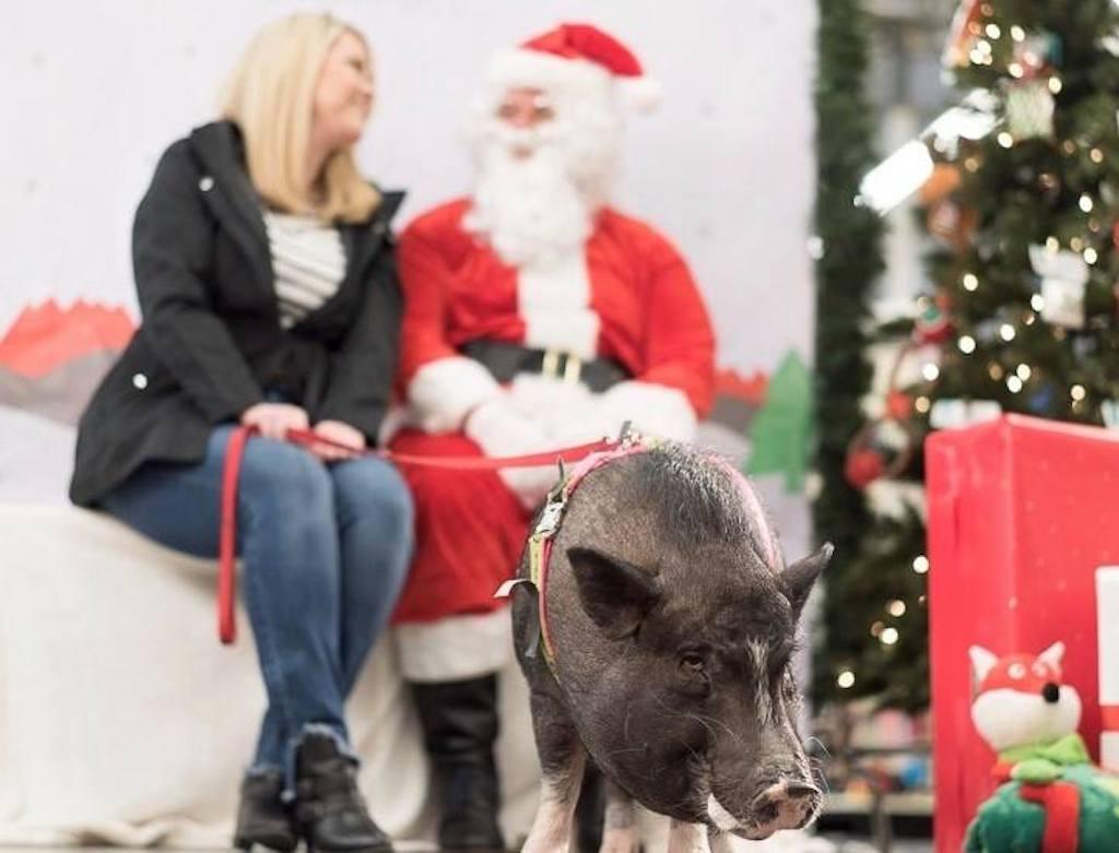 Woman at PetSmart with Santa and pig