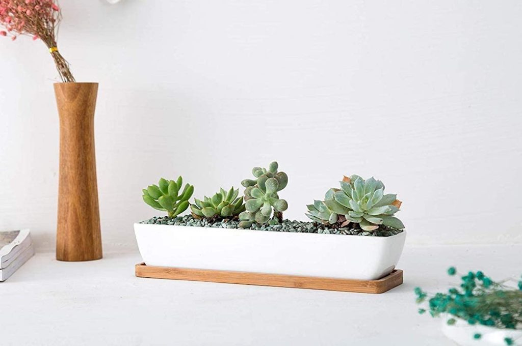 multiple succulents in white and bamboo planter sitting on the table