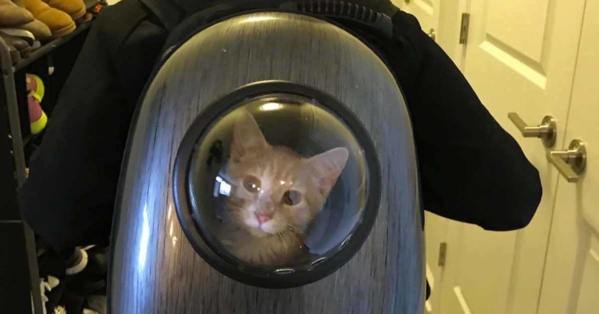 Small cat in a Bubble Window Pet Carrier