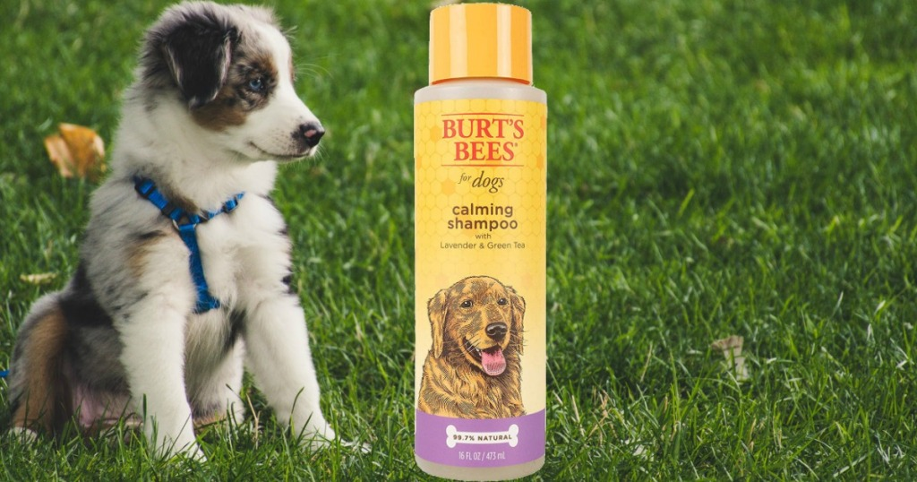 Bottle of dog shampoo near grassy scene with young puppy