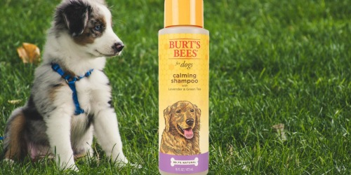 Burt's Bees for Dogs Natural Calming Shampoo Only $3.23 Shipped on Amazon (Regularly $12)