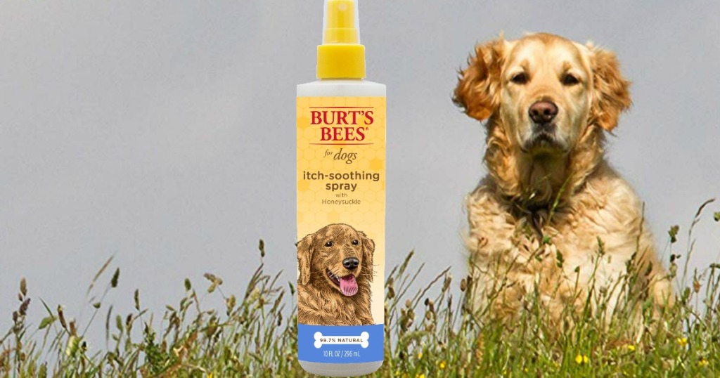 Bottle of anti-itch spray for dogs