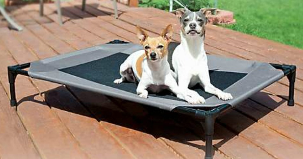 two small dogs lying on Dog Cot