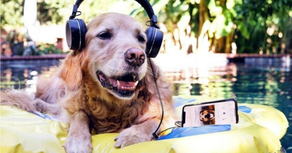Dog Listening to Audible
