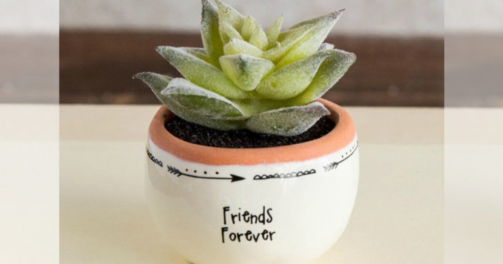 Friends Forever succulent