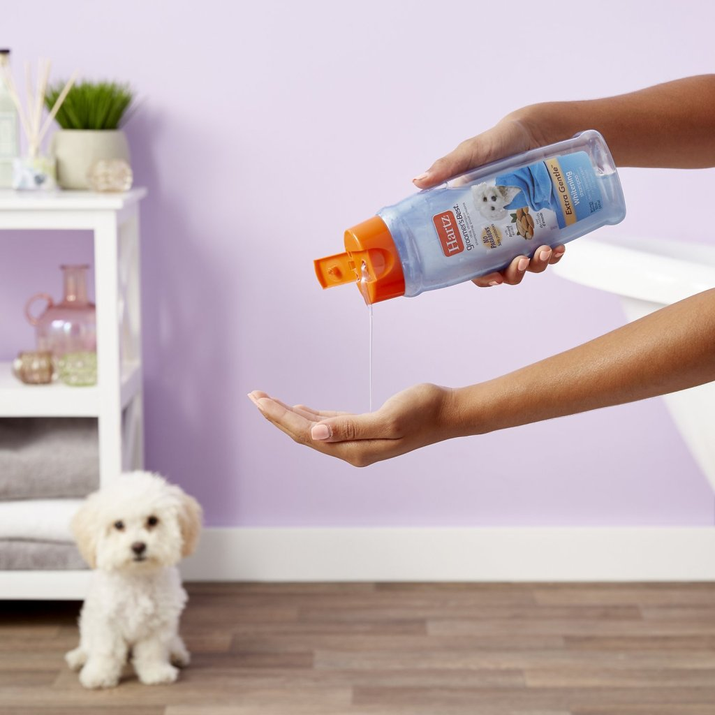 Hand squirting Hartz Shampoo into other hand while dog watches