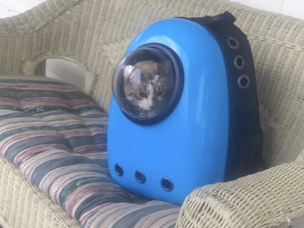 Pet Carrier Bubble Backpack resting on a patio sofa with a cat inside