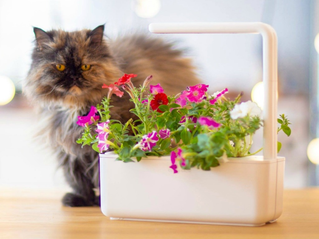 Cat near flowers in an indoor planter