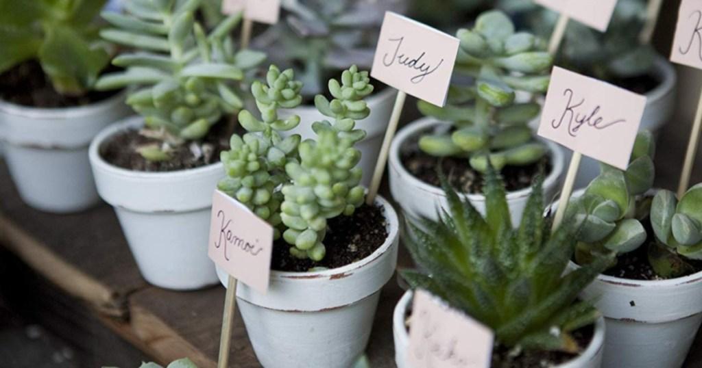 Costa Farms Succulents Indoor Plants 25