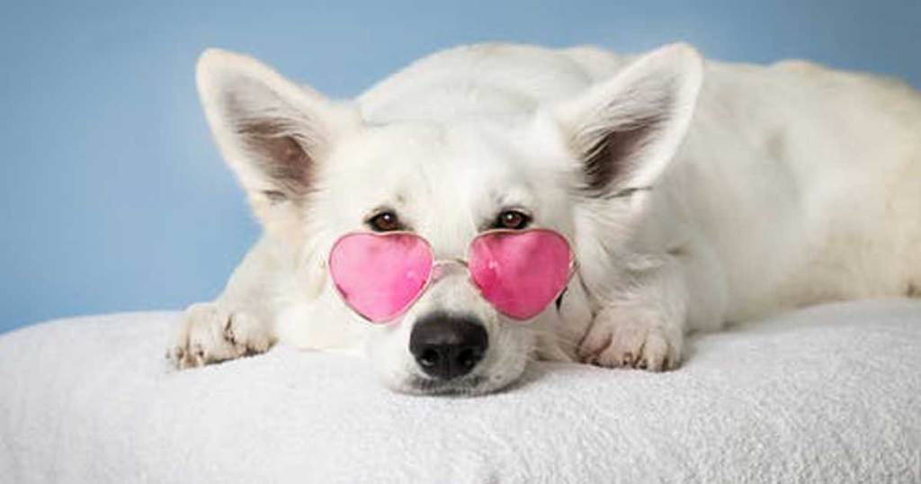 dog laying down wearing heart shaped sun glasses