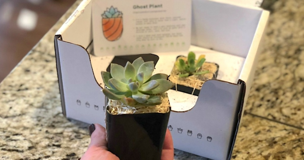 holding baby succulent