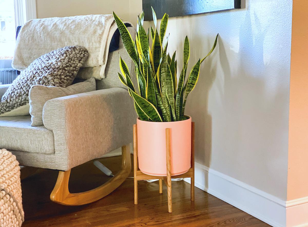 green snake plant in modern orange planter sitting in room next to rocking chair