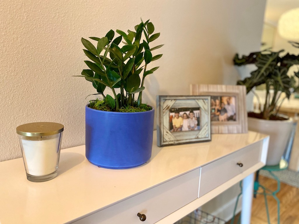 potted plant on console table with pictures